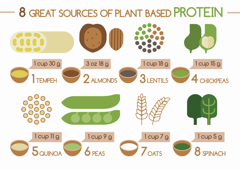 The Best Sources of Protein | Feel Great in 8